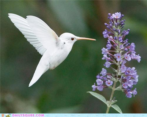 Hummingbird dreams me | earthengirl