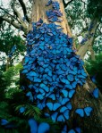 blue-butterfly-tree1