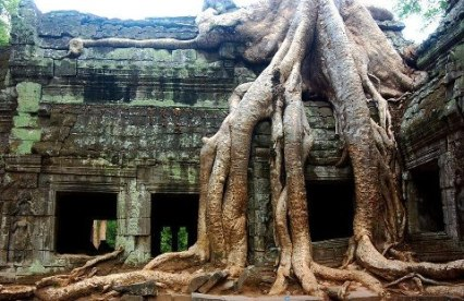 Angkor Wat and the Tree