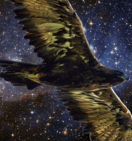 drean and deep space golden eagle sm