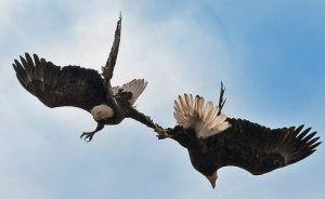 courtship ritual 2
