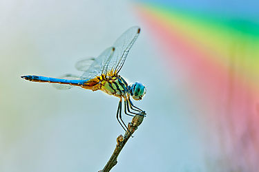 rainbow colored insect SOUL MATE DREAM
