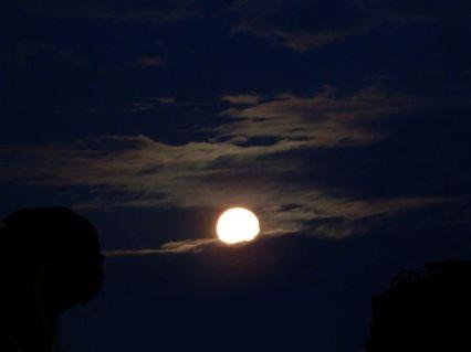 harvest moon 2013
